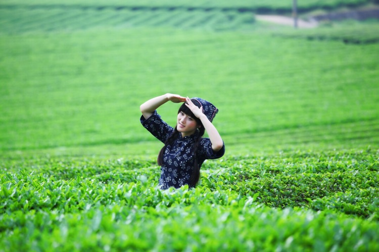 茶山姑娘采茶去