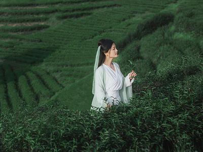 古装茶山摄影